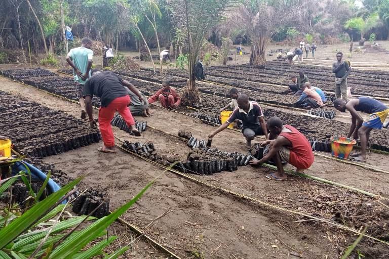 Des habitants en train de préparer une pépiniere au Congo
