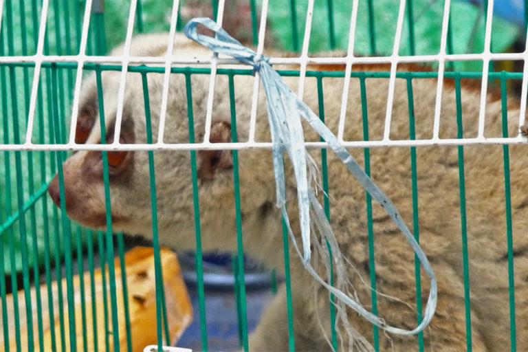 25-slow-loris-in-wildlife-market-768×512