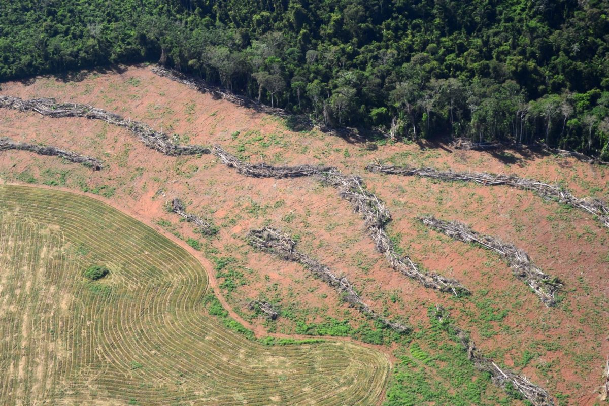 An area of cleared forest in the municipality of Novo Progresso, in Brazil's Pará state, in the so-called Arc of Deforestation. This region on the edge of the Brazilian Amazon has been undergoing an accelerated process of transformation into savannah. Image courtesy of IBAMA.