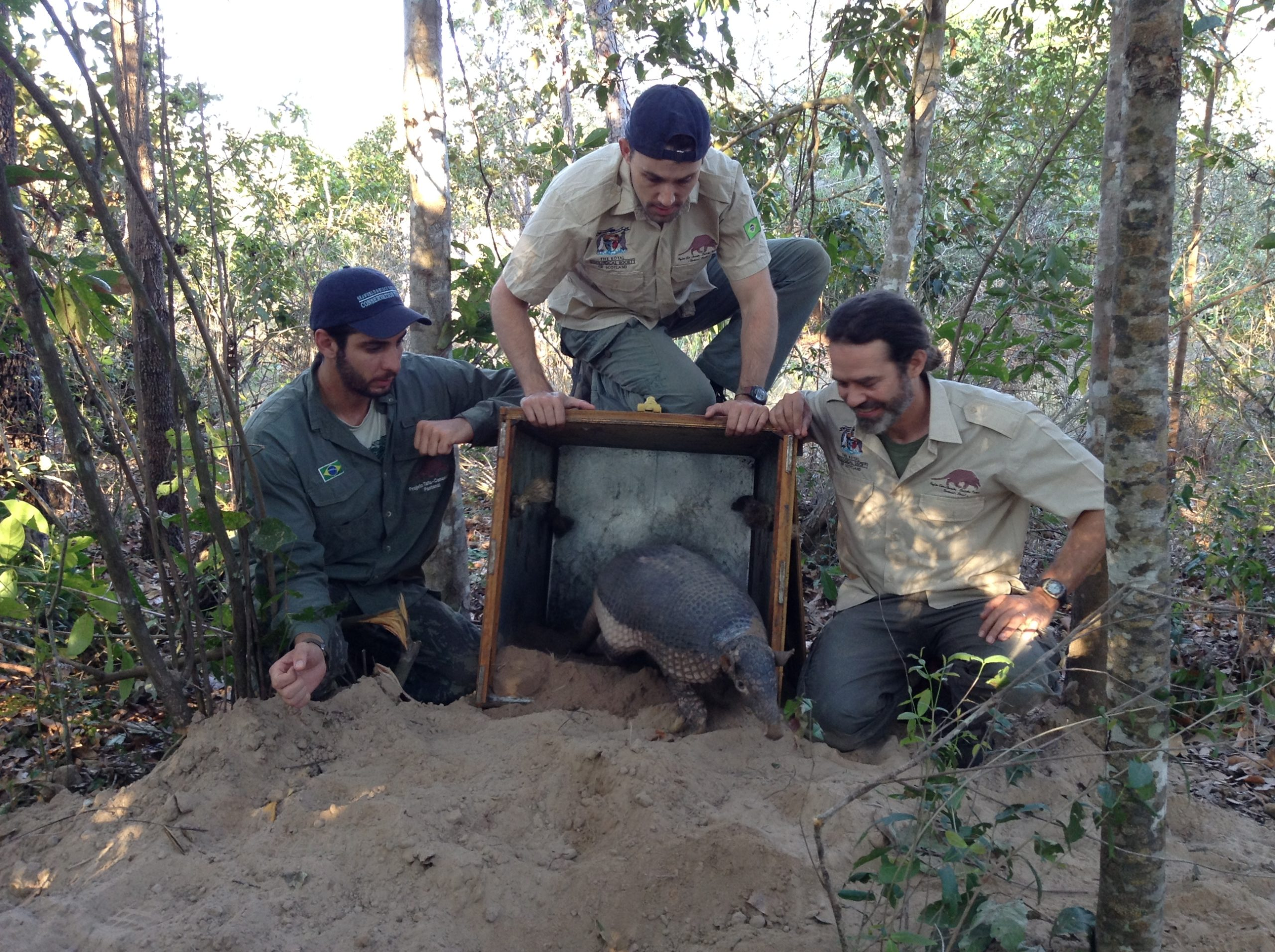 Arnaud Desbiez, right, and fellow team members reintroduce a giant armadillo into nature. Image courtesy of the Giant Armadillo Project.
