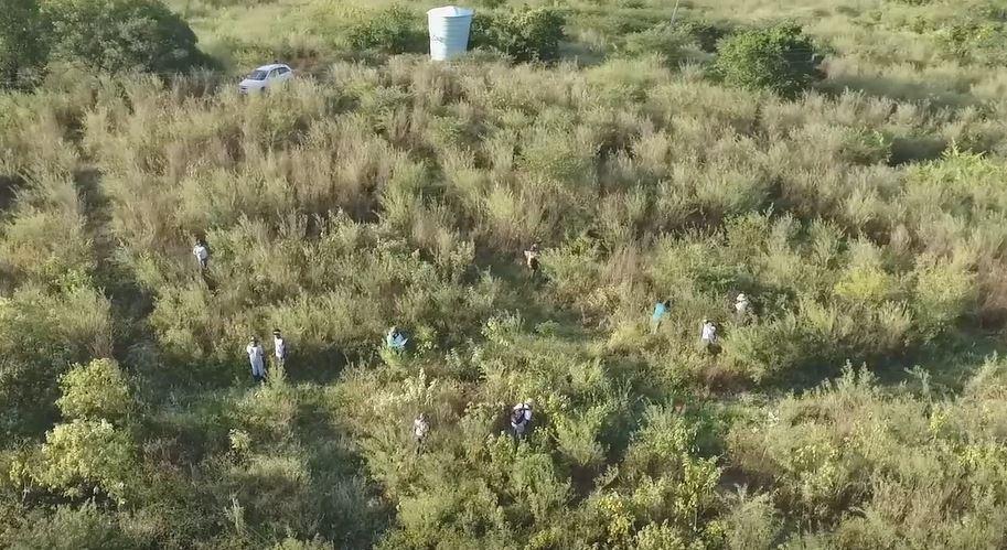Projeto de reflorestamento da Caatinga usa canos de PVC para acelerar crescimento de mudas e prolongar tamanho da raiz de espécies nativas