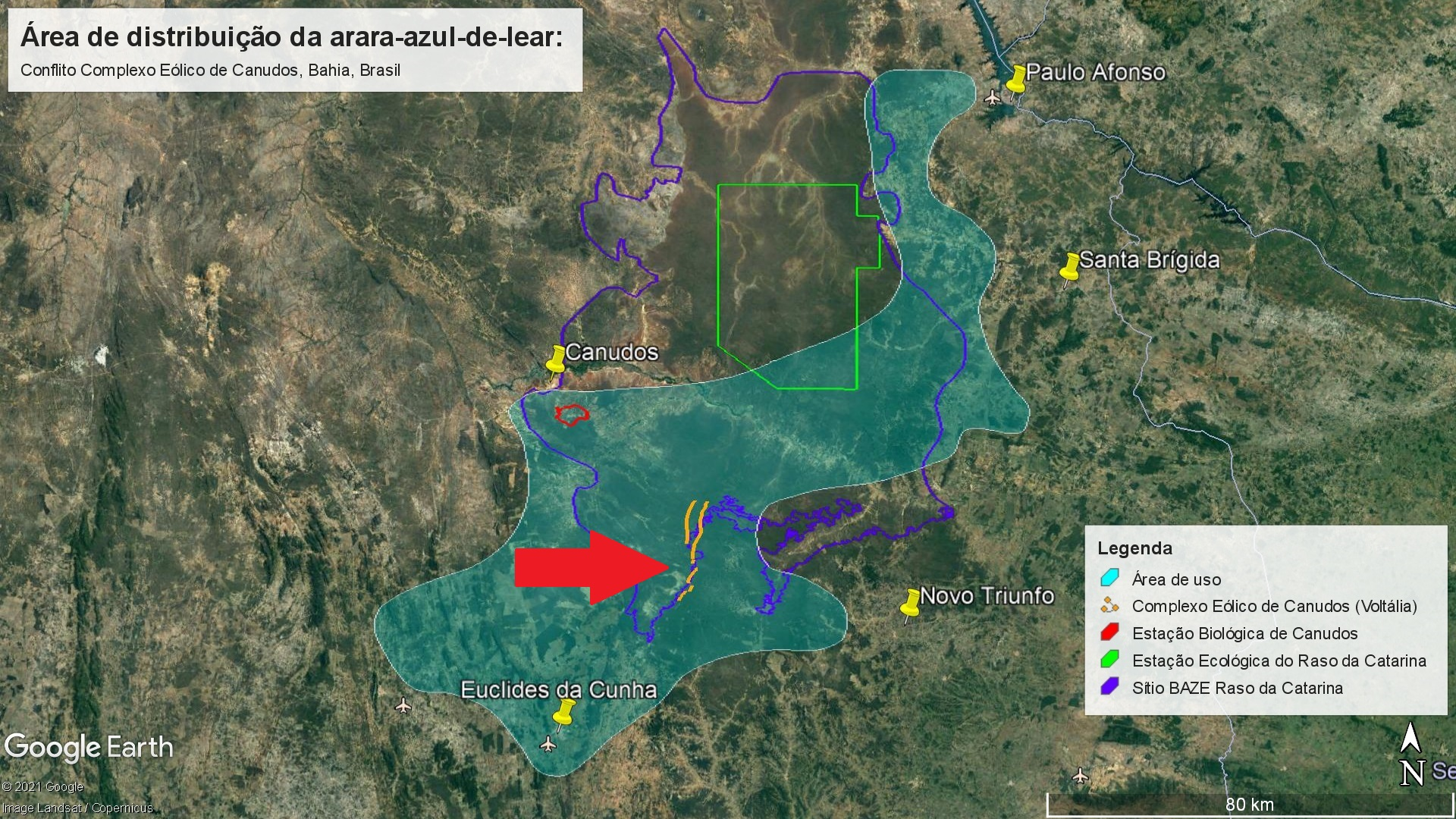 The red arrow indicates the location of the Canudos wind farm is indicated by a red arrow near the yellow lines. The light blue patch is the Lear's macaw home range in the Raso da Catarina region. Image courtesy of the Biodiversitas Foundation.