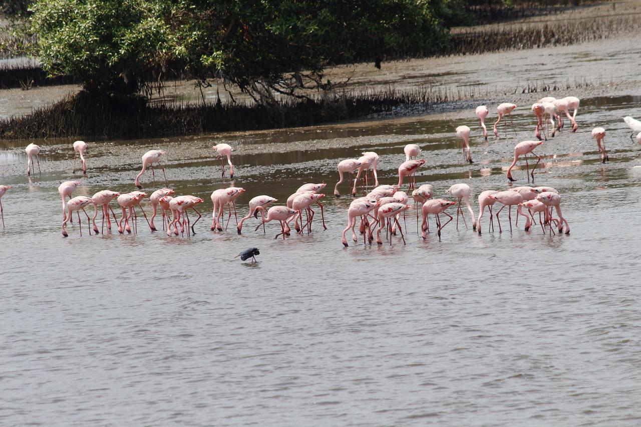 Mumbai gets a flamingo sanctuary as trade-off for trans