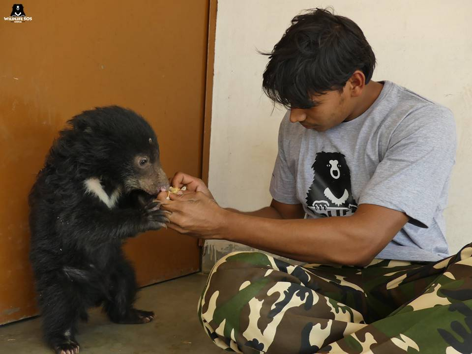 Rescuing wildlife straying into the wrong jungle
