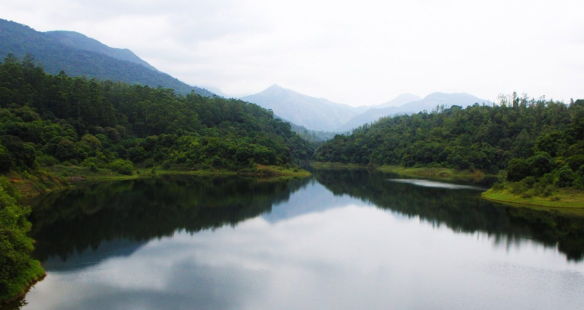 State of Forest Report says that India's forest and tree cover has