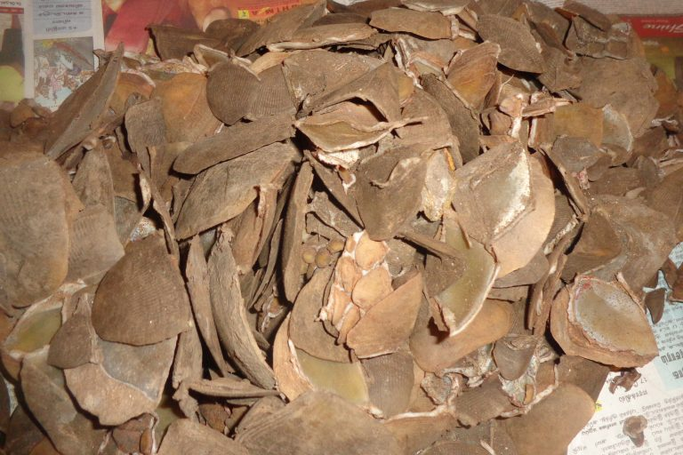 Pangolin scales seeizure. Wildlife trafficking is one of the main threats to all eight pangolin species across the world. Photo from Wildlife Crime Control Bureau.