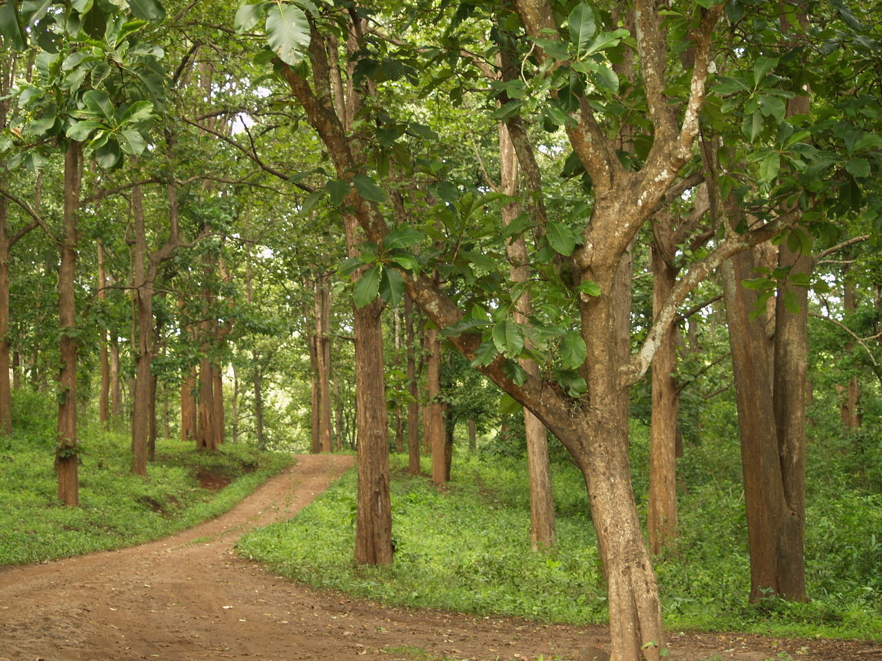 India's new forest policy draft draws criticism for emphasis on