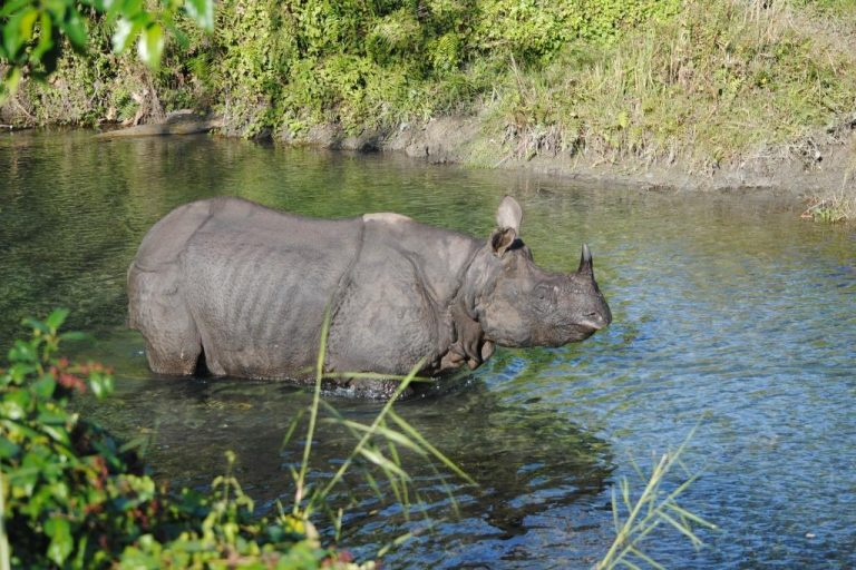 A rhino in Jaldapara. Photo credit: Udayan Dasgupta/Mongabay
