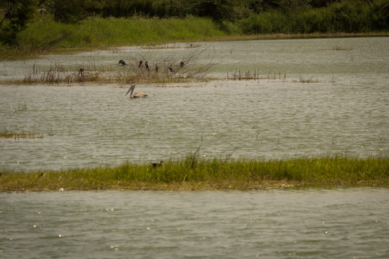 Wetlands of Tamil Nadu soon to have protected status