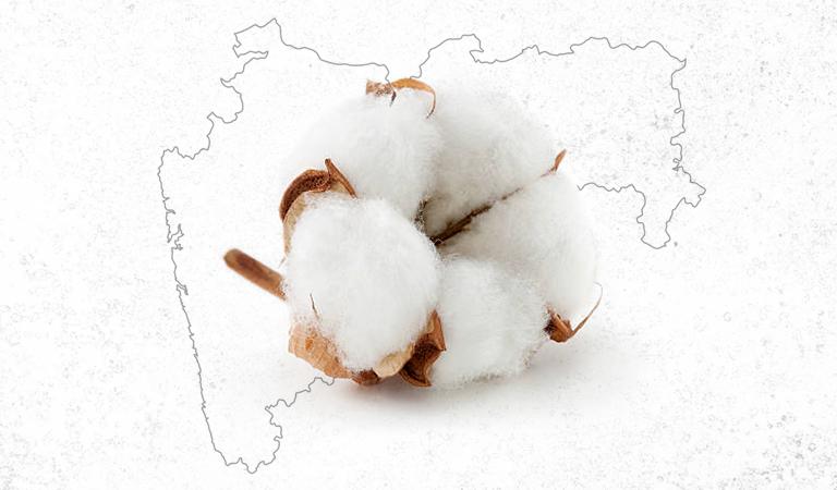 Desi Cotton Maharashtra
