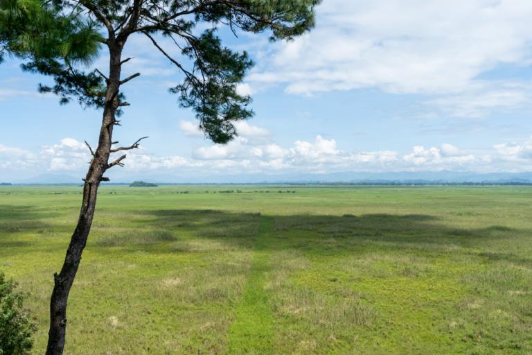 Keibul Lamjao National Park landscape