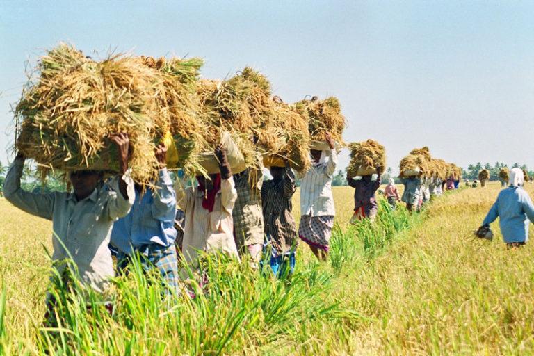 Andhra Pradesh's push for zero budget natural farming