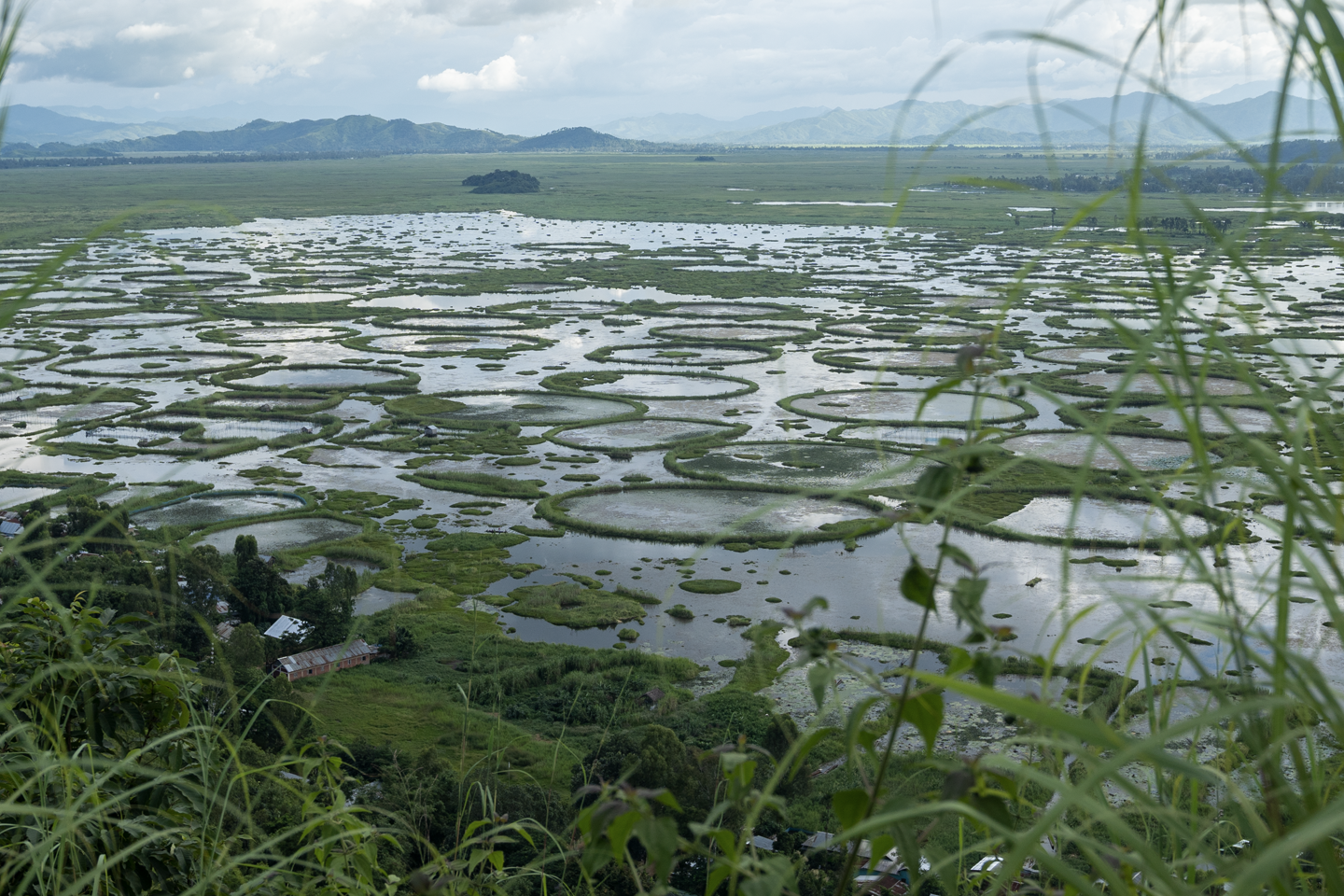 Fish production from Loktak lake dropped drastically since the 1950s and numerous native fish species have either gone extinct or have become endangered. Photo credit: Kartik Chandramouli