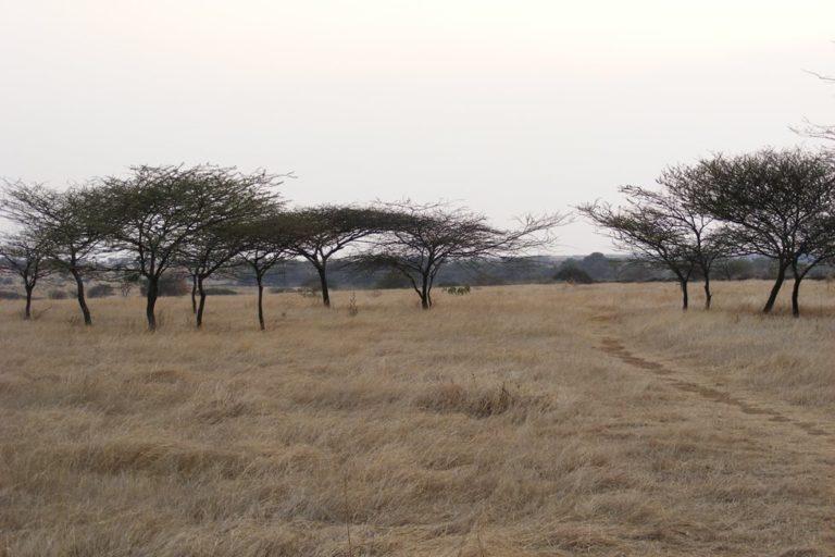 Grasslands in Maharashtra's Nannaj Wildlife Sancturary. Photo credit: Wikimedia Commons
