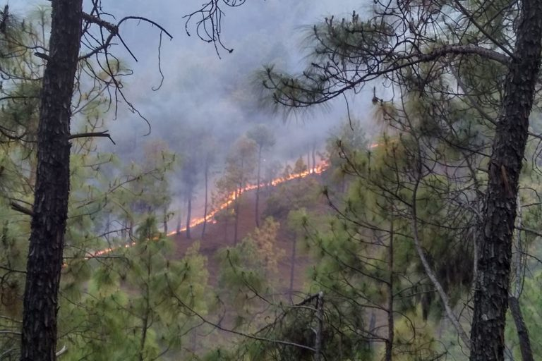 A forest fire in Uttarakhand's Almora. Photo credit: Wikimedia Commons.