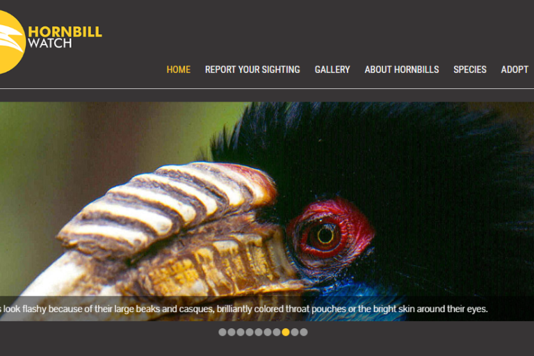 Hornbill Watch was launched in 2014. By February 2017 the platform had received 938 records from 430 contributors across India covering all nine species of hornbills found in India. Photo from Hornbill Watch.