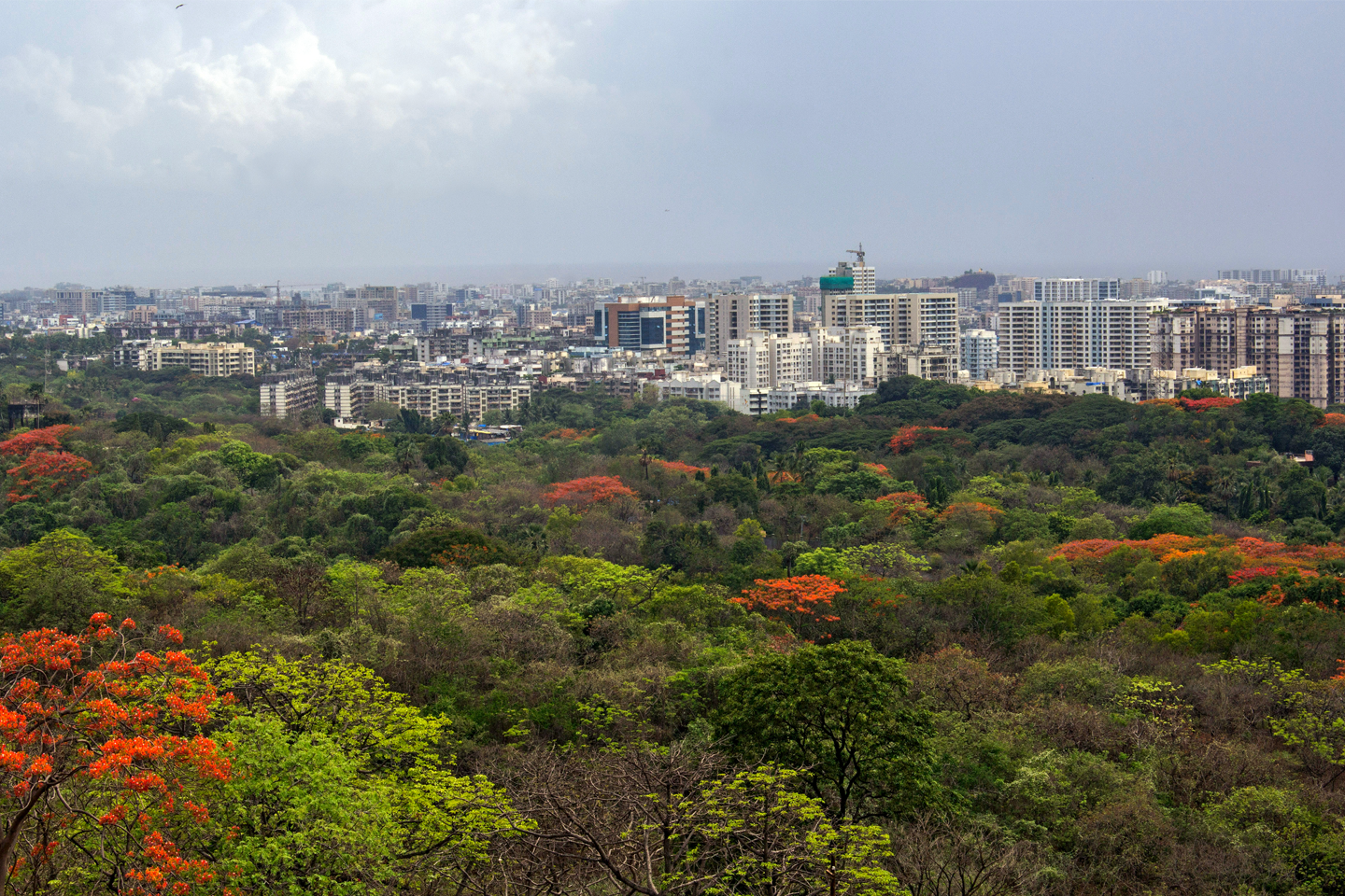 A view of the Aarey Milk Colony and the urban jungle of suburban Mumbai around it. Aarey falls in the ecosensitive zone of the Sanjay Gandhi National Park but it is not notified as a forest. Photo credit: Rajesh Sanap