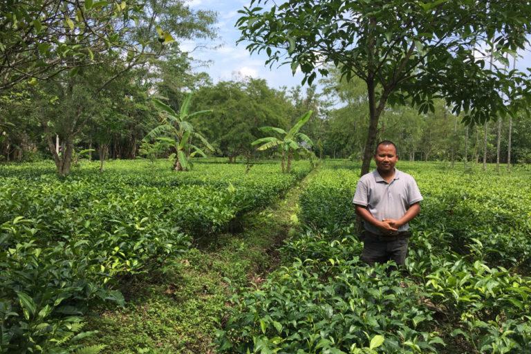 Tezing Bodosa's tea farms produce Certified Elephant FriendlyTM Tea. Photo credit: Certified Elephant FriendlyTM Tea programme.