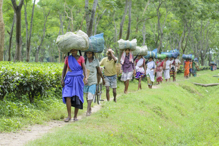 Tea garden workers returning home after a morning's work at Kalaigaon, Assam in northeast India. Photo credit: Dheerajdeka11/Wikimedia Commons.