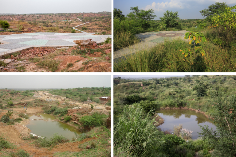 Before (left) and after (right) area being restored in Aravalli Biodiversity Park. Source Vijay Dhasmana.