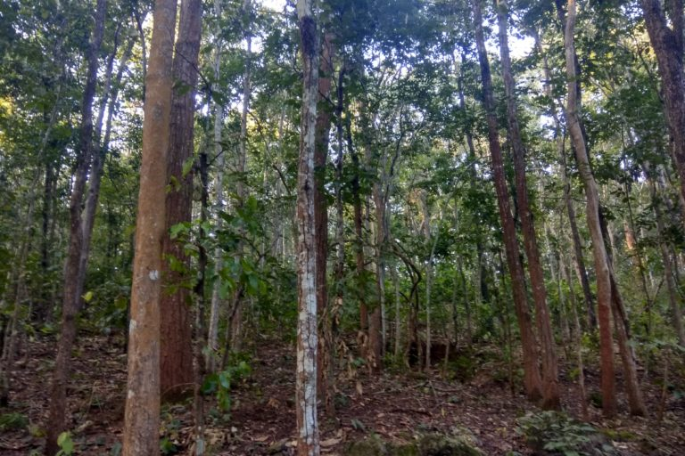 India has an ambitious target of achieving 33 percent of its total land under forest cover. Photo credit: Mayank Aggarwal/Mongabay-India.