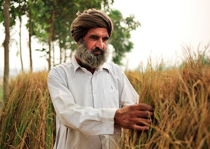 A Punjab farmer in his field. Photo credit: Wikimedia Commons