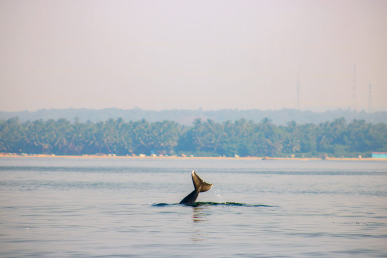 Indian-Ocean-Humpback-Dolphin