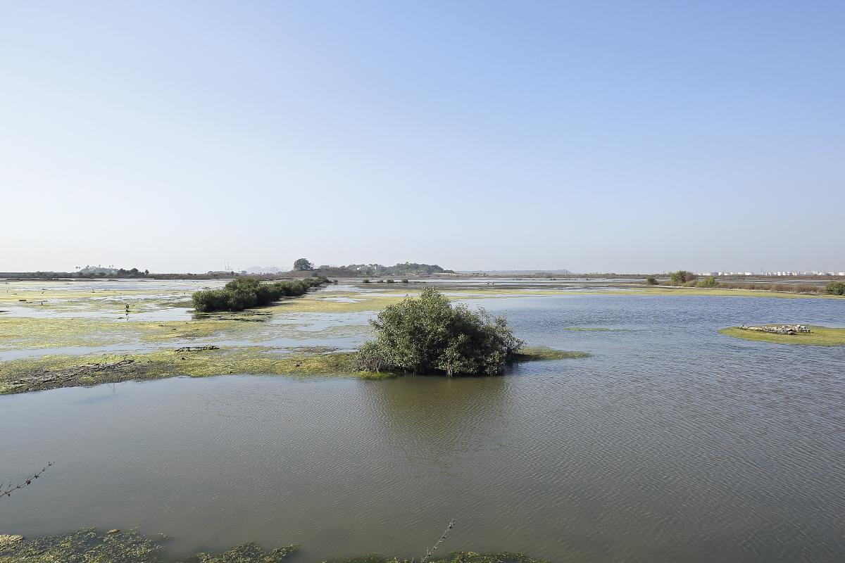 Panje wetlands in Navi Mumbai is a thriving ecosystem for birds. Many natural habitats in the Mumbai region are under pressures of development. Photo credit: Aishwarya Sridhar.