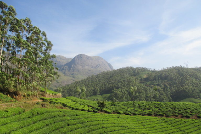 There are multiple uses for land in the Anamalai Hills on which Munnar is located. Photo credit: Raji Warrier.