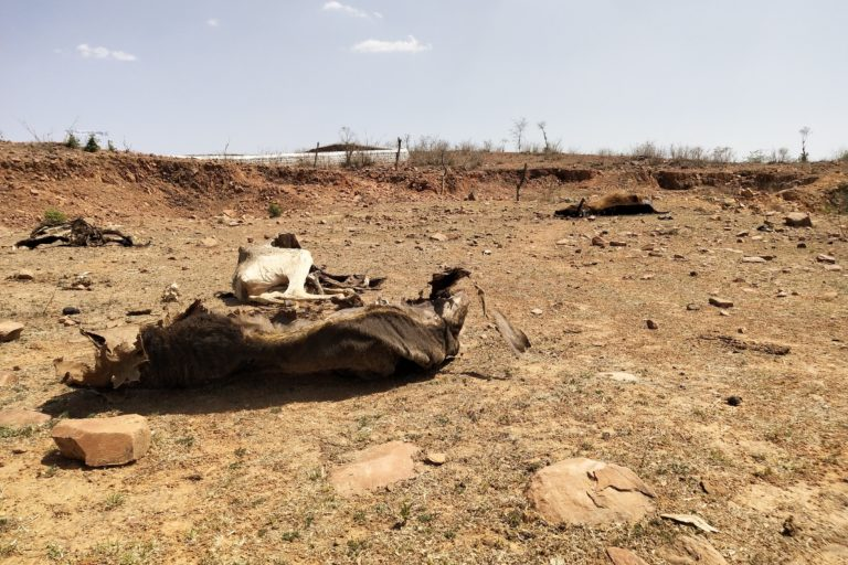 cattle-carcass-bundelkhand