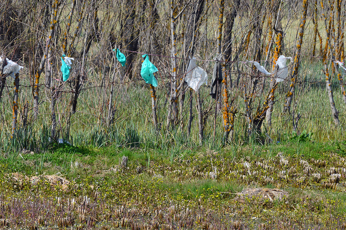 A farmer in Ganderbal hung polythene bags on his fence to protest against the incursion of plastic waste in agricultural fields. Credit: Athar Parvaiz/Mongabay.