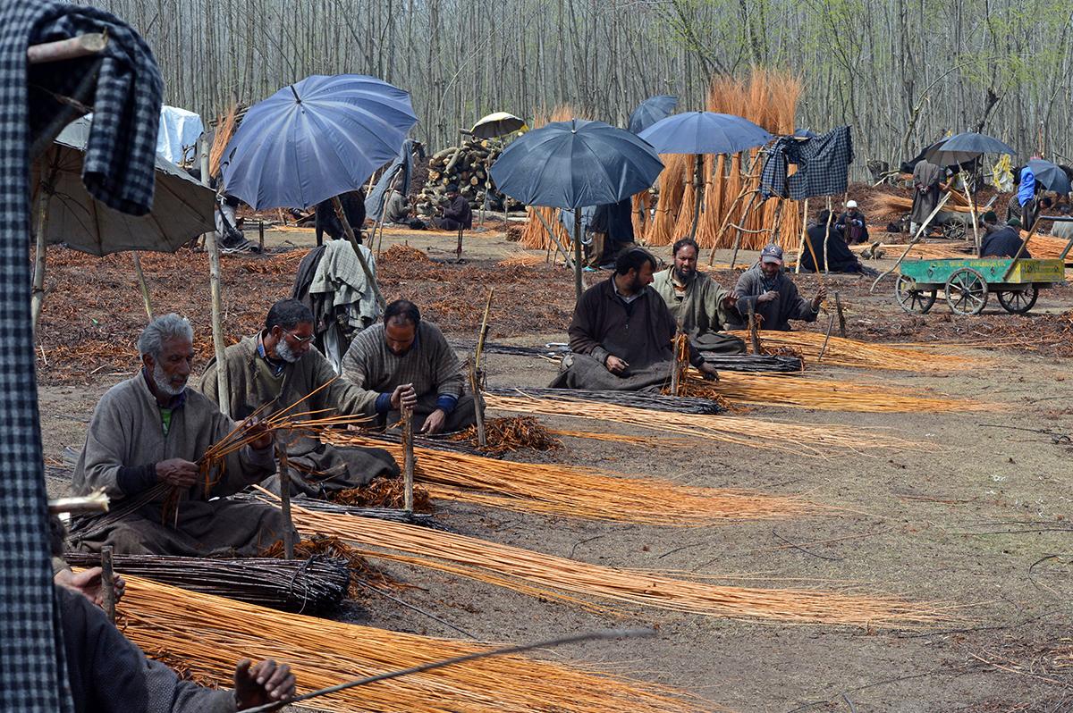 Artisans prepare material for making wicker baskets at Ganderbal, Kashmir. Credit: Athar Parvaiz/Mongabay.