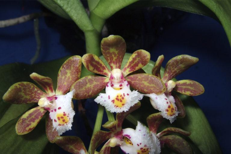Wildflower-citizen-science