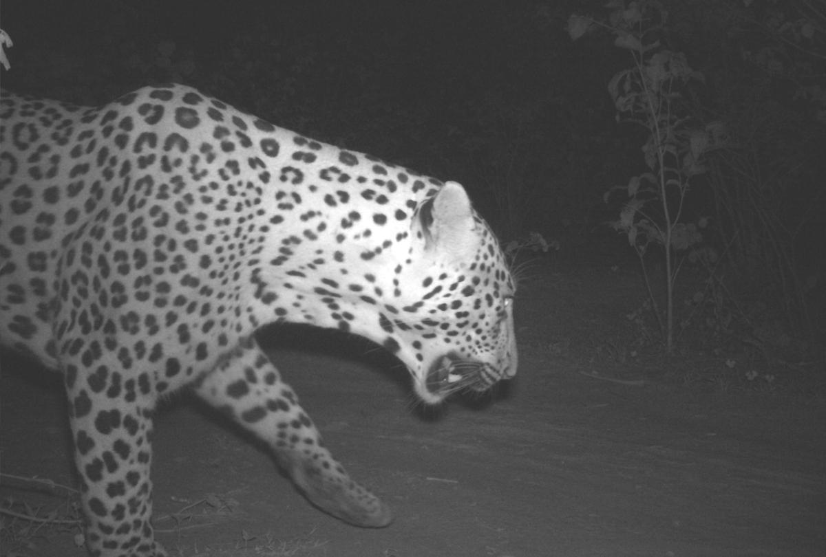 1-leopard-mirzapur