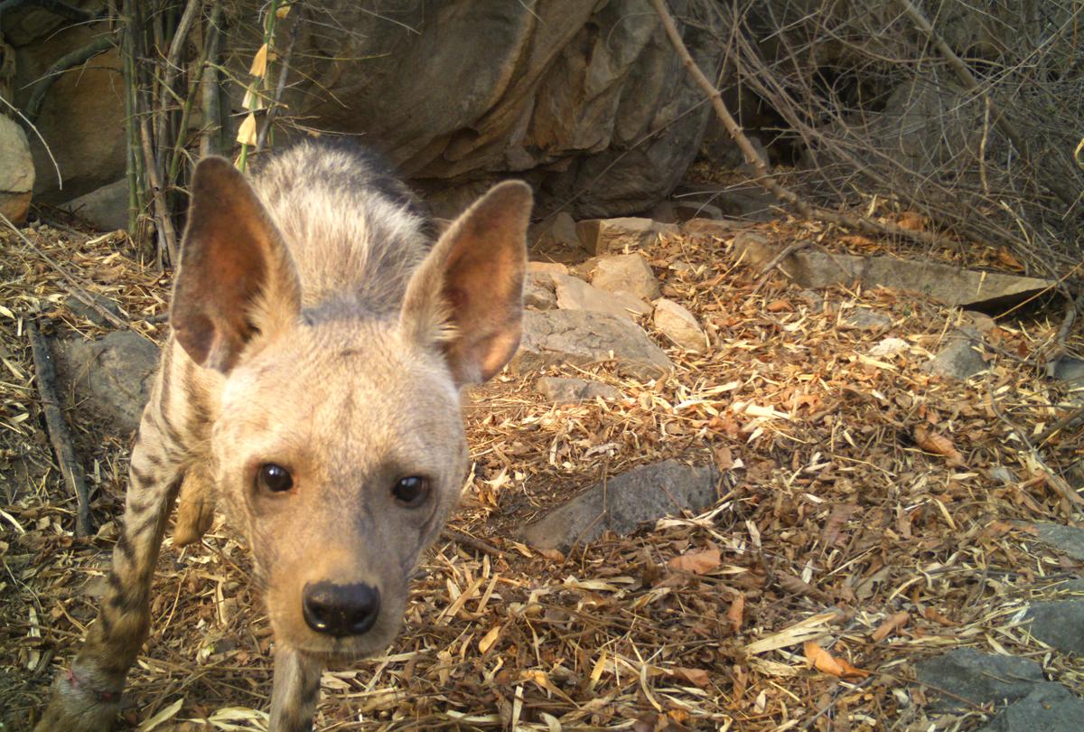 3-Hyena-mirzapur