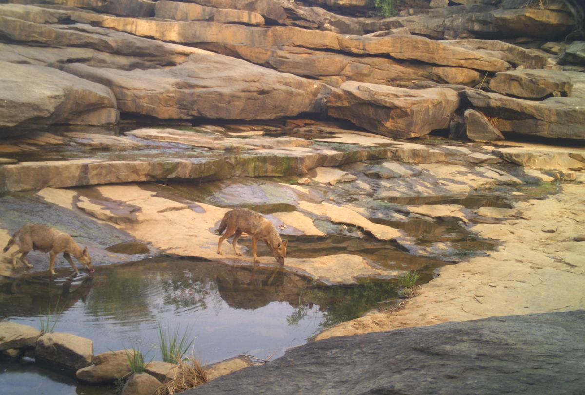 5 golden jackal mirzapur