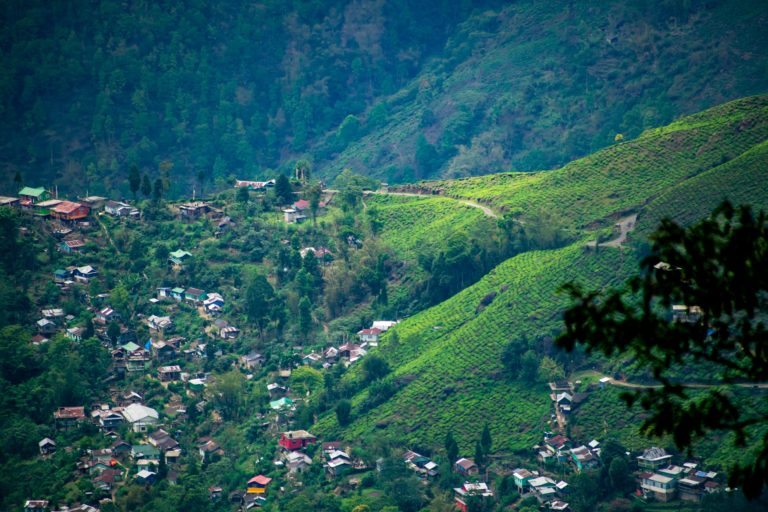 Teas are grown at elevations ranging from 600 to 2000 metres above sea level and require a minimum of 50 to 60 inches of rainfall in a year.
