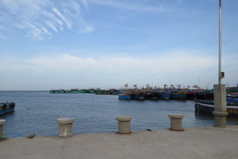 The Tharuvaikulam wharf from where the palmyra tree climbers who took to fishing set sail with their eco-friendly gill nets.