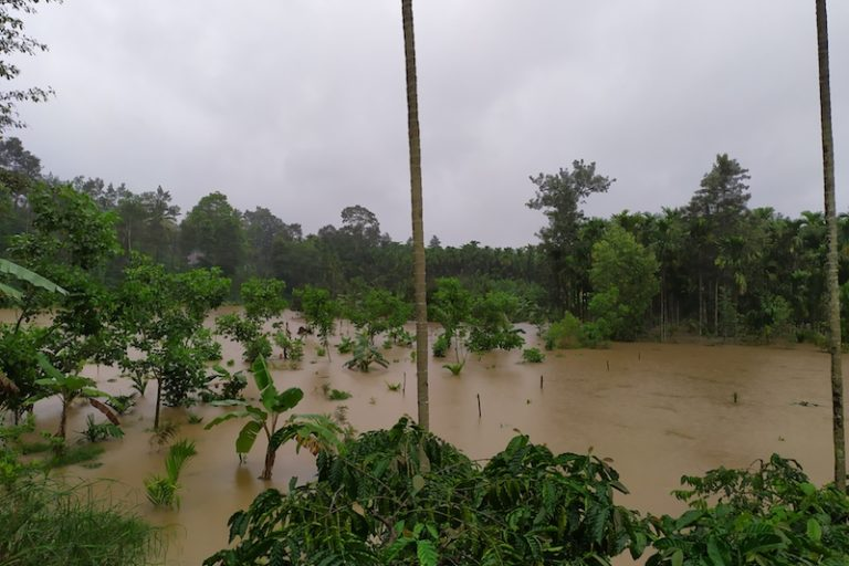A flooded plantation in Khandya.
