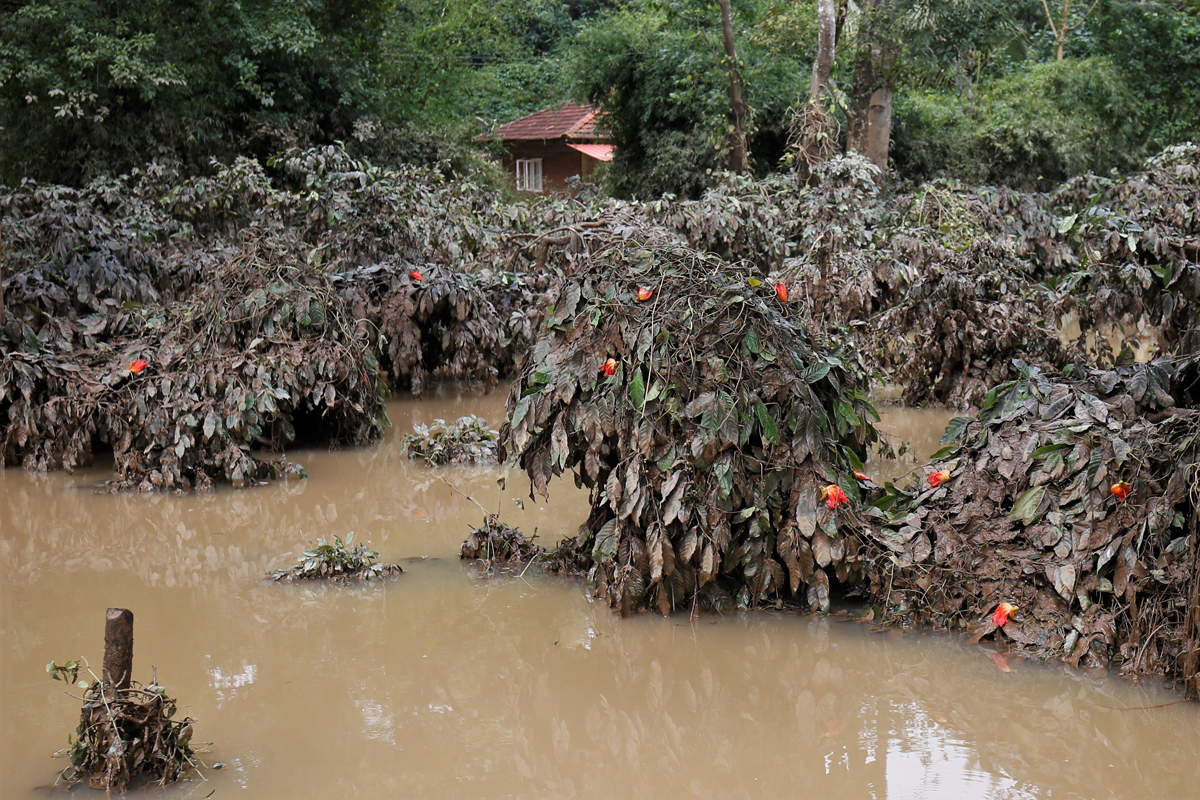 A coffee estate submerged in the floodwaters of the Cauvery river in Kodagu district. A preliminary survey by authorities revealed that over 102,034 hectares of coffee plantation were damaged. Photo by Abhishek N. Chinnappa.