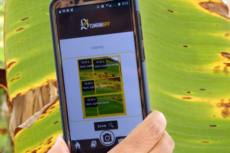 The Tumaini app is an artificial intelligence-powered tool that can help in early detection of infections in banana crops. Photo from Tumaini.