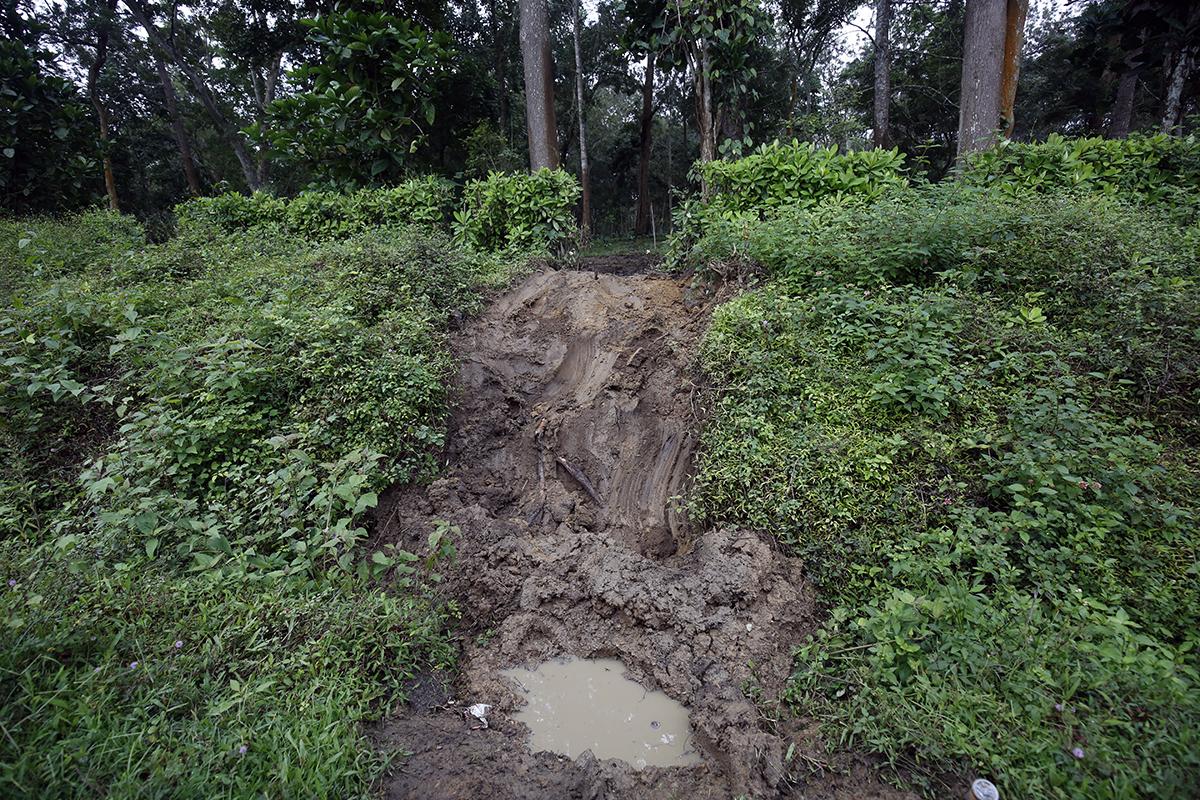 Tracks left by elephants crossing into an estate near Maldare, Kodagu. Photo by Abhishek N. Chinnappa.