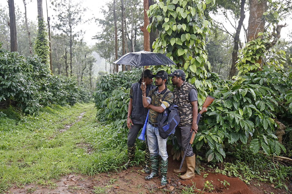 Forest department's Rapid Response Team personnels take shelter from the rain while on an exercise to chase elephants in an estate near Srimangala, Kodagu. Photo by Abhishek N. Chinnappa.
