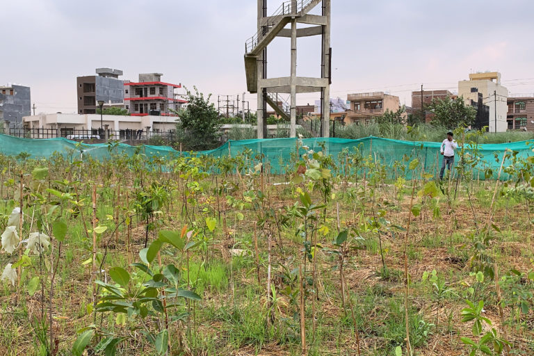 8500 saplings were planted in 3000 square metre area at the Collectorate's compound, Noida in August 2019. Photo by Arnold Joyce.