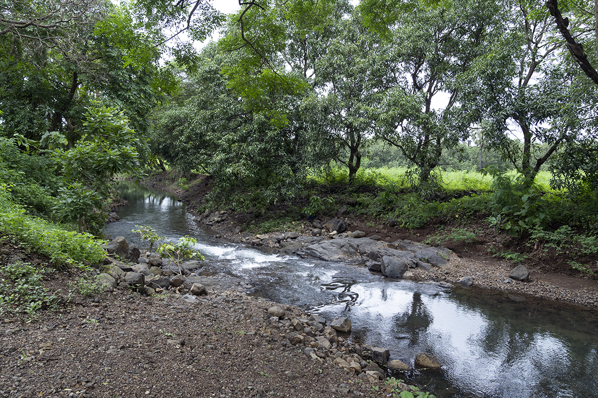 Dahanu was one of only three regions in India to be declared ecologically fragile in 1991. Photo by Kartik Chandramouli/Mongabay.