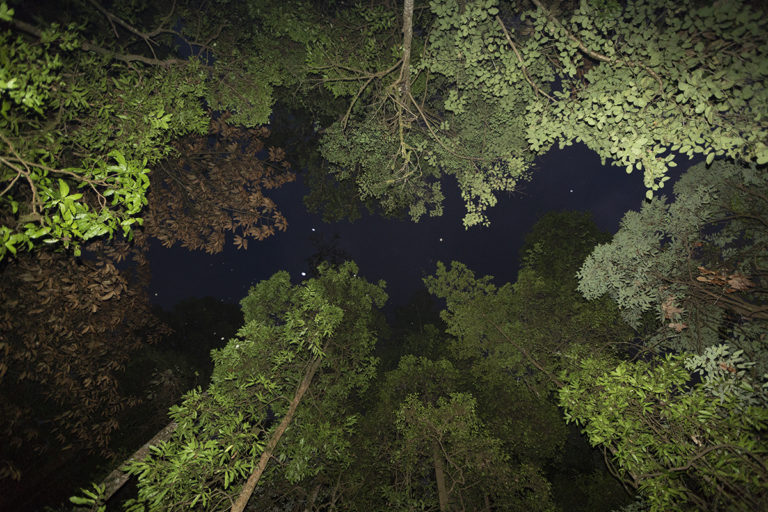 A view of the tree canopy inside Myristica swamps. Photo by Pradeep Hegde.