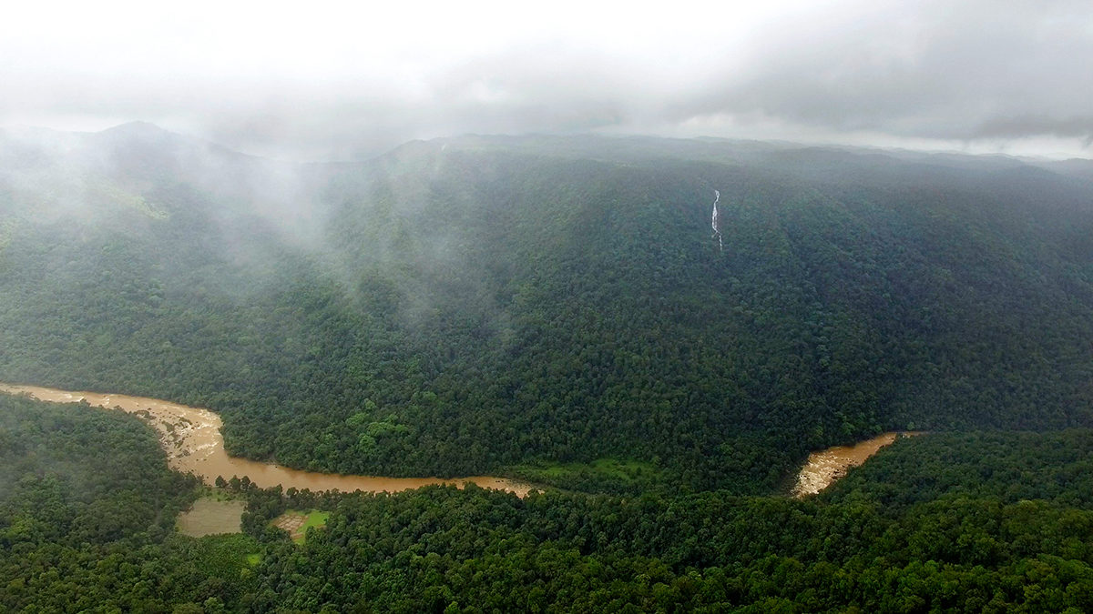 The Aghanashini River in Karnataka is a hotspot of Myristica swamps. These ecosystems are highly vulnerable to human exploitation and climate change. Photo by Ashwin Bhat.