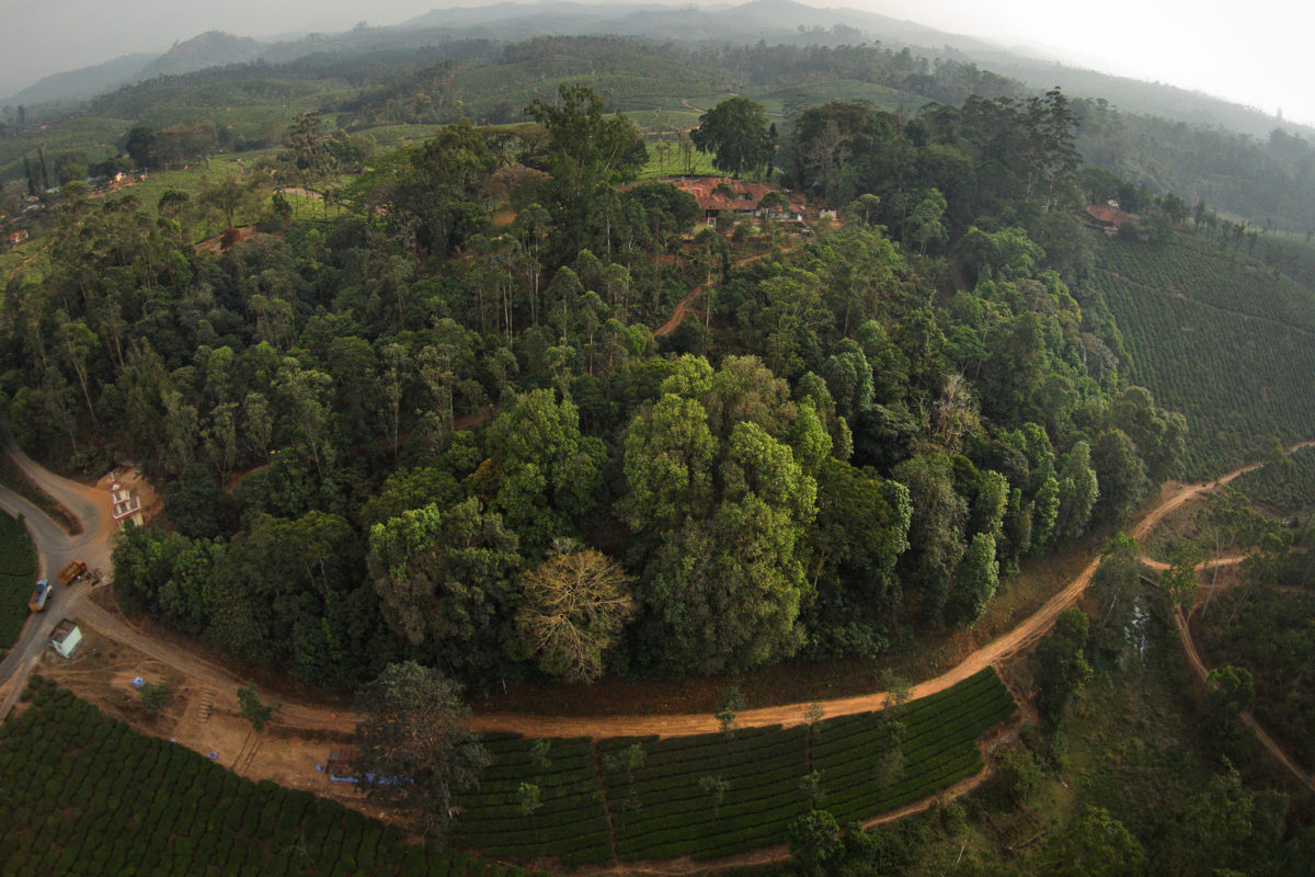 A rainforest fragment and in the Anamalai Hills. Areas close to the road towards the bottom-left of the image were restored during 2002-03. Photo by Kalyan Varma.