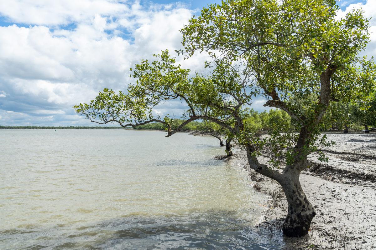 Bangladesh-mangrove