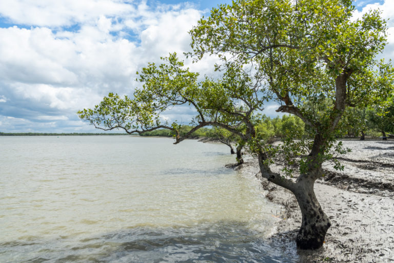Mangroves are in peril as they are squeezed between unregulated coastal development and the effects of climate change such as sea-level rise and extreme weather events. Photo by Kartik Chandramouli/Mongabay.